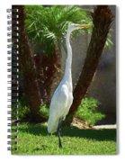 Great Egret Just Strutting Impressionism 1 Spiral Notebook