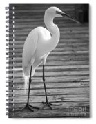 Great Egret On The Pier - Black And White Spiral Notebook