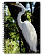 Great Egret Up Close Spiral Notebook