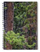 Great Gray Owl Perched Spiral Notebook