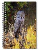 Great Grey Owl Portrait Spiral Notebook