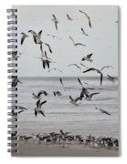 Great Gull Group On The Beach Spiral Notebook