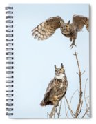 Great Horned Owl Couple Spiral Notebook