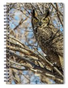 Great Horned Owl In Cottonwood Tree Spiral Notebook