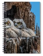 Great Horned Owlets Spiral Notebook