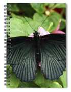 Great Mormon Butterfly Spiral Notebook