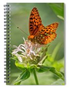 Great Spangled Fritillary On Bee Balm Spiral Notebook