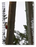 Great Spotted Woodpeckers Spiral Notebook
