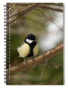Great Tit Male 2 Spiral Notebook