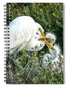 Great White Egret Family Spiral Notebook