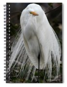 Great White Egret Windblown Spiral Notebook