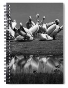 Great White Pelicans, Lake Nakuru, Kenya Spiral Notebook