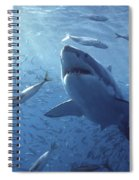 Great White Shark Carcharodon Spiral Notebook