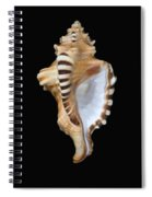 Great White Tooth Spiral Notebook