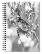 Great Wings  Black And White Dragonfly Spiral Notebook