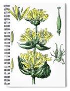 great yellow gentian, Gentiana lutea Spiral Notebook