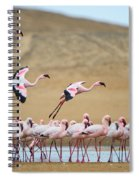 Greater Flamingos Phoenicopterus Spiral Notebook