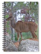 Greater Kudu Female - Rdw002756 Spiral Notebook
