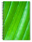 Green Abyss Spiral Notebook