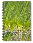Green Algae On Rock Spiral Notebook