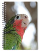 Green And Red Conure With Ruffled Feathers Spiral Notebook