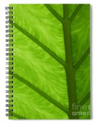 Green Spiral Notebook