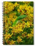 Green Anole Hiding In Golden Rod Spiral Notebook