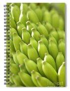 Green Banana Bunch Spiral Notebook
