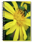 Green Bee On Yellow Daisy Spiral Notebook