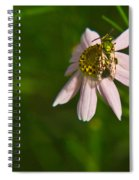 Green Bee Searches For Pollen Spiral Notebook