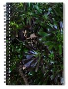 Green-black Cucculent Plant. Big Bush Spiral Notebook