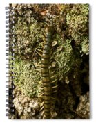 Green Centipede Spiral Notebook