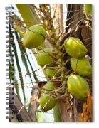 Green Coconut Spiral Notebook