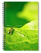 Green Creature On A Broad Leaf. Spiral Notebook