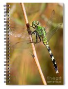 Green Dragonfly Closeup Spiral Notebook
