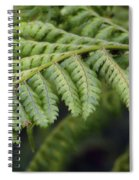 Green Fern Spiral Notebook