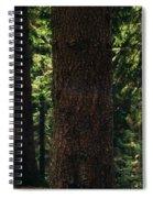 Green Forest Spiral Notebook