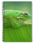 Green Frog Whitelips Spiral Notebook