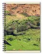 Green Gator With Border Spiral Notebook