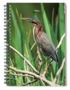 Green Heron At The Governor's Palace Gardens Spiral Notebook
