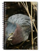 Green Heron Hunting Spiral Notebook