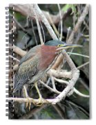 Green Heron On A Branch Spiral Notebook