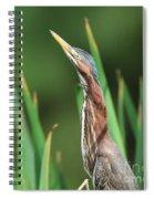 Green Heron Watches Spiral Notebook
