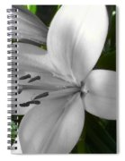 Green Highlighted Lily Spiral Notebook