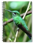 Green Crowned Brilliant Hummingbird Spiral Notebook