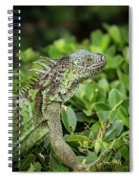 Green Iguana Vertical Spiral Notebook