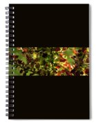 Green Leaf Red Leaf Pano Spiral Notebook