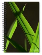 Green Leaves In Sunlight Spiral Notebook