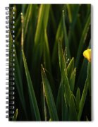 Green Marsh Grass At Sunrise On Lake Cassidy  Spiral Notebook