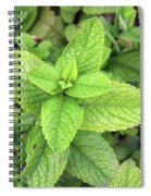Green Mint Leaves Spiral Notebook